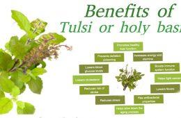 Health-benefits-tulsi